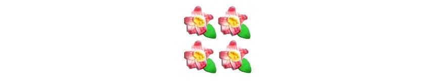 Storczyk-gama kolorów