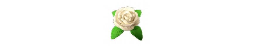 Róża M1-gama kolorów