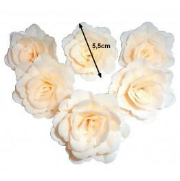 Róża chińska ecru 18 sztuk
